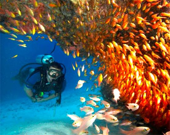 Bequia Rental Villas, Hotels & Apartments - - SCUBA Dive in Bequia 2 Tank Dive - - All Locations